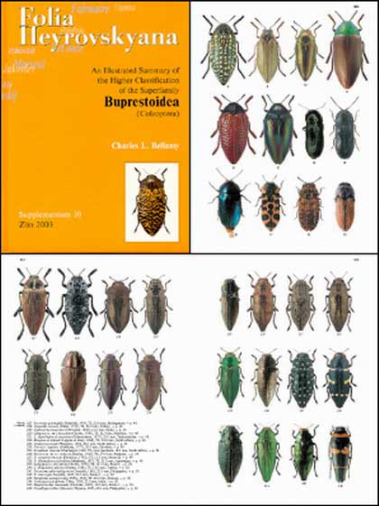 Bellamy C. L., 2003, Folia Heyrovskyana, Supplementum 10: An illustrated summary of the higher classification of the superfamily Buprestoidea (Coleoptera).