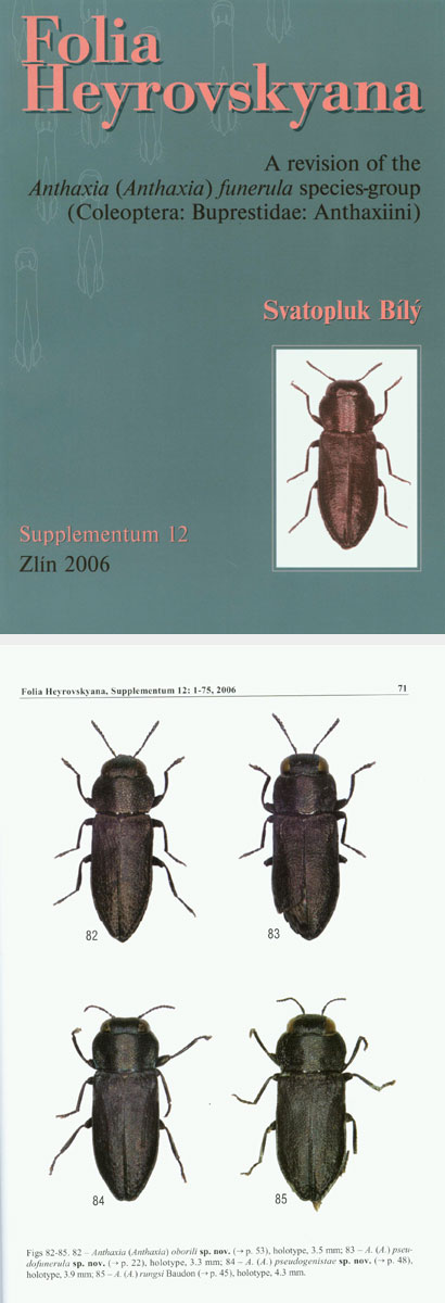 Bily S., 2006, Folia Heyrovskyana, Supplementum 12:A revision of the Antaxia funerula species-group (Coleoptera:Buprestidae:Antaxiini)